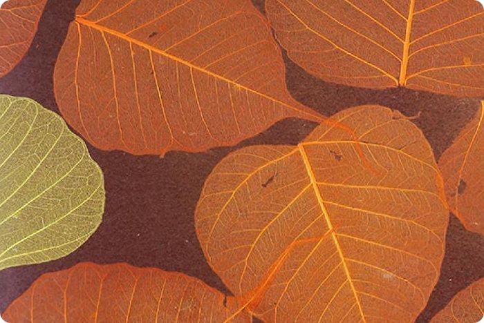 Натуральные обои могут включать в себя скелетированные окрашенные листья магнолии, фикуса, манго, китайской крапивы.