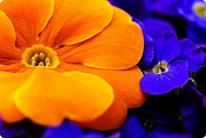 Если синий был введен в оранжевый в рекомендуемых пропорциях, то можно лишь внести коррективы в яркость полученного состава либо добавить требуемой синевы.